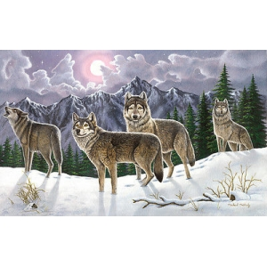 Schilderen op nummer 40x30cm: wolven