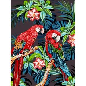 Schilderen op nummer 50x40cm (op frame): papegaaien
